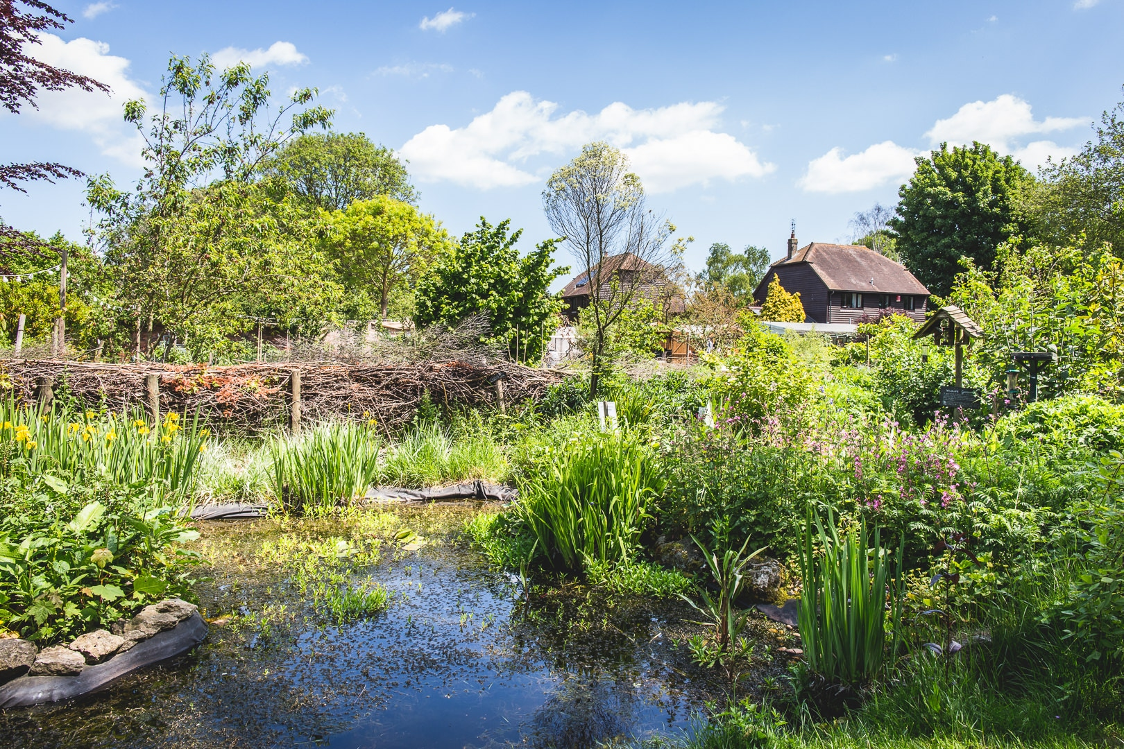 The pond at the abbey physic community garden in Faversham, photographed by documentary photographer Simon Hawkins